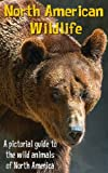 North American Wildlife - A pictorial guide to the wild animals of North America