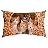 Sweet Cats Small Pillow Kids Pillow Small Pillow By BS