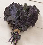 Kale Scarlet D3172 (Purple) 200 Open Pollinated Seeds by David's Garden Seeds