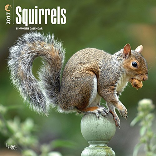 Squirrels - 2017 Calendar 12 x 12in