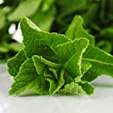 Lawn & Patio - 200 Seeds, Peppermint Herb (Mentha piperita) Seeds By Seed Needs