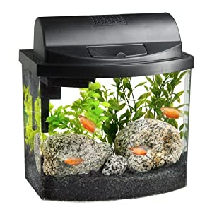 Planting Different Types Of Fish Tank Plants Fish Tank