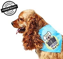 DogSpot Dogambo Khush Hua ! Bandana - Medium