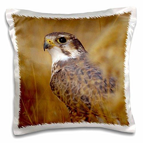danita-delimont-birds-prairie-falcon-bird-na02-rbr0032-rick-a-brown-16x16-inch-pillow-case-pc-84183-
