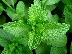 Mint Leaves / Fresh - 0.75oz bag