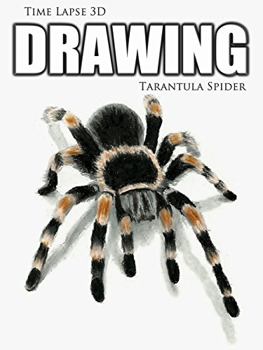 Time Lapse 3D Drawing: Tarantula Spider