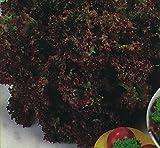 Organic Vegetable - Lettuce - Lollo Rossa - 10g Seeds - Bulk Pack