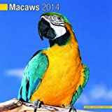 Macaws 2014