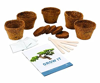 Gift Republic: Grow It. Grow Your Own Bonsai Trees