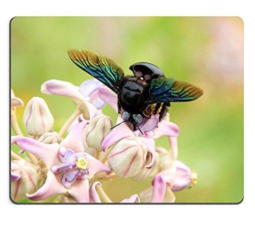liili-mouse-pad-natural-rubber-mousepad-bumblebee-gathering-pollen-yala-national-park-sri-lanka-imag