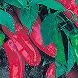 Eine alte, süße Sorte aus Italien - Marconi rot - 10 Samen