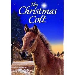 Christmas Colt