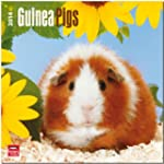 Guinea Pigs 2014 Square 12x12