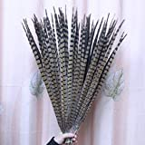 Maslin 20pcs 50-55cm Real Long Natural Pheasant Feather Tail Plumage for Clothing Home Wedding Table Decoration
