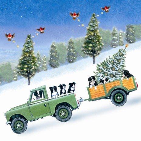 Festive Farmyard Fun Border Collies Christmas Cards Pack