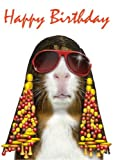 Funk Pets Rock Guinea Pig Birthday Card