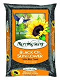 Morning Song Black Oil Sunflower
