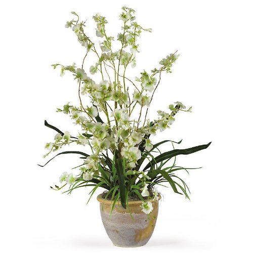Dancing Lady Silk Orchid Plant - Green