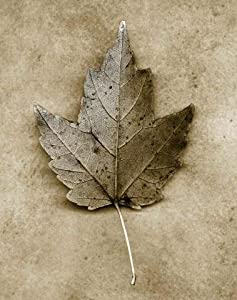 Maple Leaf Wall Mural - 30 Inches H x 24 Inches W - Peel and Stick Removable Graphic