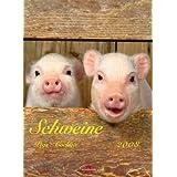 Schweine 2008