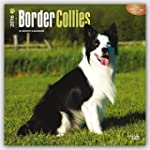 Border Collies 2016 Square 12x12 Wall...