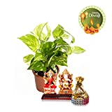 NG Diwali Gift Indoor Money Plant Hybrid With Lakshmi Ganesh And Dry Fruits Pack