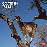 (12x12) Goats in Trees - 2013 Wall Calendar