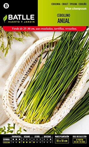 semillas-batlle-016930bols-cebollino-anual