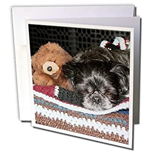 3dRose 8 x 8 x 0.25 Inches An Adorable Shiatsu Doggie With Its Toy Baby Bear in and Old Aged Color on a Homemade Afghan Greeting Card, Set of 12 (gc_54771_2)