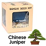 Eves Chinese Juniper Bonsai Seed Kit, Woody, Complete Kit to Grow Chinese Juniper Bonsai Tree from Seed