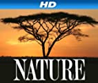 Nature [HD]: Jungle Eagle [HD]