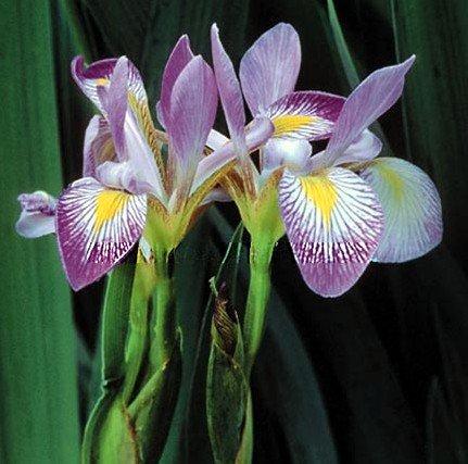 Easyliving Native Perennial Wildflowers