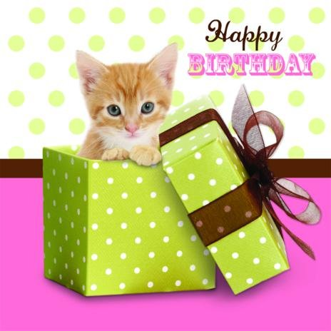 Birthday Kittens Kitten Birthday Card on