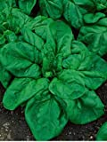 Search : Giant Noble Heirloom Spinach Seeds - Spinacia Oleracea - 2 Grams - Approx 204 Gardening Seeds - Vegetable Garden Seed