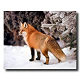 Red Fox In The Snow With Pine Trees Home Decor Wall Picture 16x20 Art Print