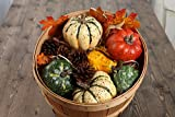 Factory Direct Craft Package of Large Gourds and Pinecones Decor Motif for Creating Focals, Centerpieces, and Displays