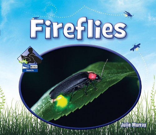 Buy Firefly Insect Now!
