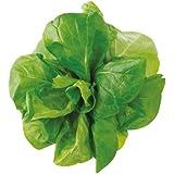 U-ING(ユーイング) 水耕栽培用種子キット サラダ菜 Green Farm UH-ZKLA06E