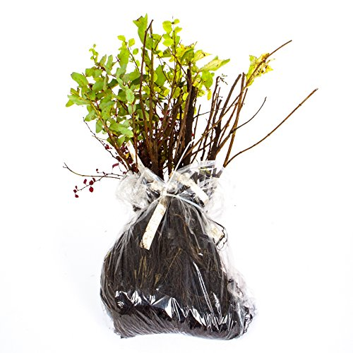 the-ultimate-winter-hardy-shrub-collection-12-different-bare-root-bushes