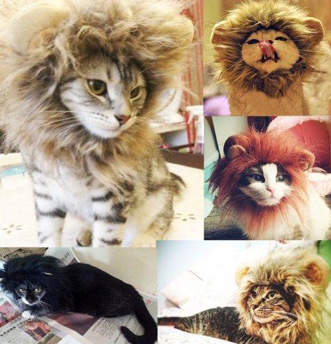 Dragonpad-Cat-Costume-Lion-Mane-Wig & Dragonpad Cat Costume Lion Mane Wig u2013 Cat and Dog Clothes