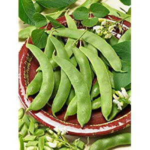 Scarlet Runner Pole Bean Seeds Phaseolus