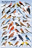 (24x36) Backyard Birds Educational Science Chart Poster
