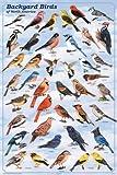(24x36) Backyard Birds Educational Science Chart Poster