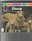 img - for Sheep (Animal World) book / textbook / text book