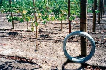 Grapevine Trellis Wire - 9 Gauge 170 Feet (Trellis Wire compare prices)