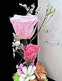 "JR Real Rose Elegant Glass Bottle Preserved Flower ""Forever Love"" Gift Box Last for 3-5 Years (Soft Pink&Hot Pink)"