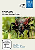 DVD Cover 'Carabus, 1 DVD