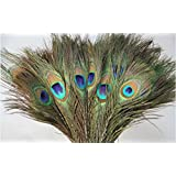 Peacock Mor Pankh Feather Tails In Small Length (Set Of 10 Pcs).