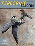 img - for Peregrine Falcon: Dynamic Carving & Painting Techniques for a New Era book / textbook / text book