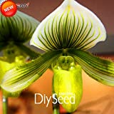 Loss Promotion!50 Seeds/Pack White Article Cypripedium Seed Potted Bonsai Seed Patio Slipper Orchid Flower Seed...